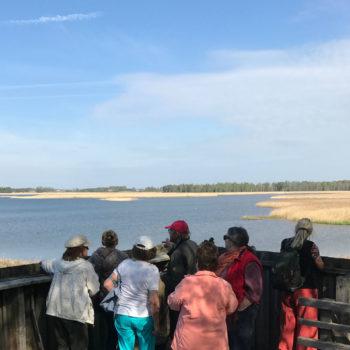 En grupp på en plattform med utsikt mot en fågelsjö.